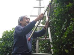 庭木・植木の剪定・植栽・植え替え