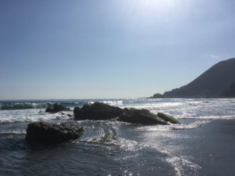 念願の伊豆の海です