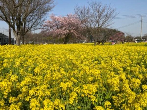 春本番!この季節は黄色とピンクが映えますね