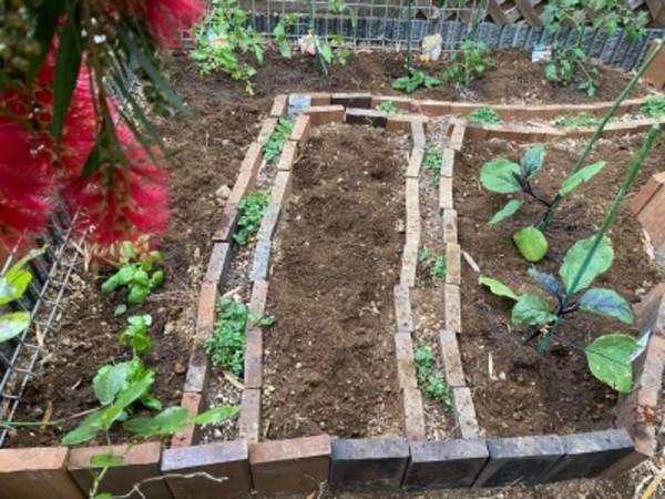 家庭菜園に野菜苗うえました