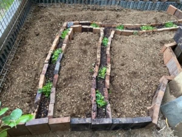 GWは自宅に家庭菜園つくりました